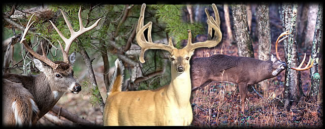 Texas deer hunting guide. Experience your deer hunting memories for a lifetime. Hunt Texas Trophy bucks on private well managed Texas ranches. Deer hunting guides for trophy whitetails, affordable hunts.